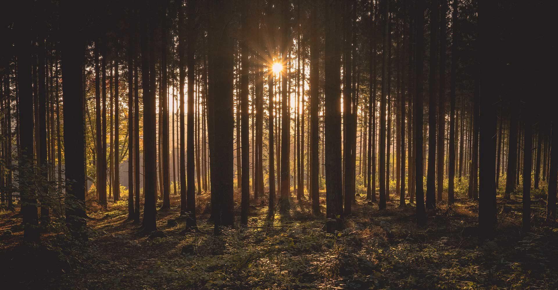 Holzhaus: ökologisch und energieeffizient